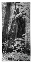Redwood Trunk Bath Towel by Craig J Satterlee