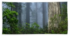 Redwoods In Blue Fog Hand Towel