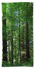Redwoods No. 3-1 Bath Towel