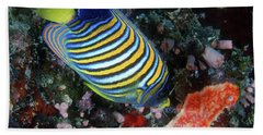 Regal Angelfish, Great Barrier Reef Bath Towel