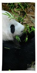 Relaxed Panda Bear Eats With Green Leaves In Mouth Bath Towel