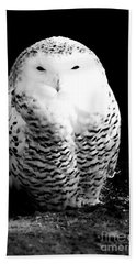 Resting Snowy Owl Hand Towel by Darcy Michaelchuk