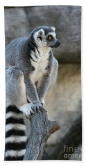 Ring-tailed Lemur #7 Hand Towel