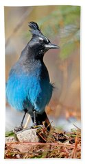 Rocky Mountain Steller's Jay Bath Towel