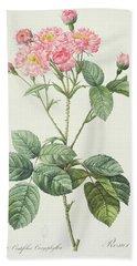 Rosa Centifolia Caryophyllea Bath Towel