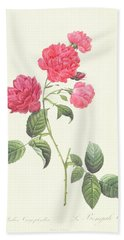 Rosa Indica Caryophyllea Bath Towel