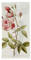 Rosa Indica Vulgaris Hand Towel by Pierre Joseph Redoute