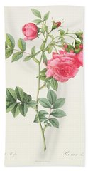 Rosa Pimpinellifolia Flore Variegato  Bath Towel