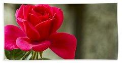 Red Rose Wall Art Print Hand Towel by Carol F Austin