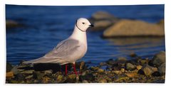Ross's Gull Bath Towel