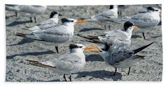 Royal Terns Hand Towel by Paul Mashburn