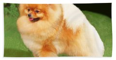 Sable Pomeranian Hand Towel