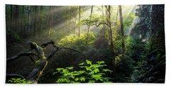 Coast Redwoods Hand Towels