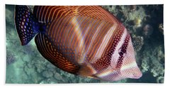 Sailfin Tang Makadi Bay Bath Towel