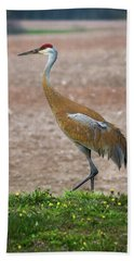 Hand Towel featuring the photograph Sandhill Crane In Profile by Bill Pevlor