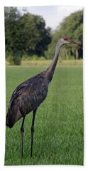 Hand Towel featuring the photograph Sandhill Crane by Richard Rizzo