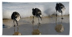 Sandpipers Feeding Hand Towel