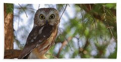 Saw-whet Owl Hand Towel