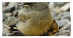 Say's Phoebe Fledgling Hand Towel