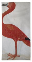 Scarlet Ibis With An Egg Bath Towel