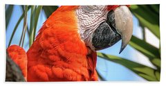 Hand Towel featuring the photograph Scarlet Macaw by Steven Sparks