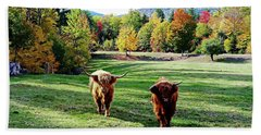 Scottish Highland Cattle - New Hampshire Fall Foliage Bath Towel