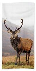Scottish Red Deer Stag - Glencoe Bath Towel