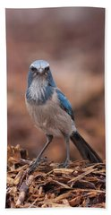 Scrub Jay On Chop Bath Towel