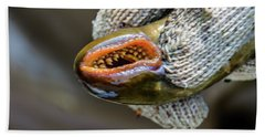 Sea Lamprey Hand Towel
