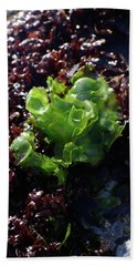 Hand Towel featuring the photograph Sea Lettuce by Adria Trail