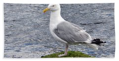 Seagull Posing Hand Towel by Glenn Gordon