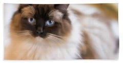 Seal Point Bicolor Ragdoll Cat Hand Towel