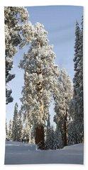 Sequoia National Park 4 Bath Towel