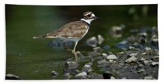 Killdeer  Hand Towel by Douglas Stucky
