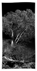 Bath Towel featuring the photograph Shoreline Tree by Roger Mullenhour