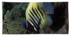 Six Banded Angelfish, Great Barrier Reef Hand Towel