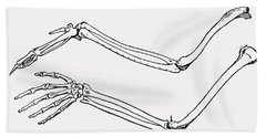 Skeleton Of A Bird S Wing And Of A Man Hand Towel