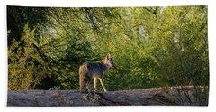 Sleepy Coyote Bath Towel