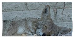 Hand Towel featuring the photograph Sleepy Li'l Coyote by Anne Rodkin