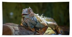 Snoozing Iguana Hand Towel by Martina Thompson