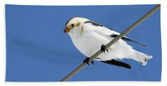 Snow Bunting Bath Towel by Brook Burling