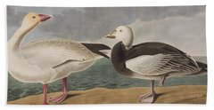 Snow Goose Hand Towel by John James Audubon