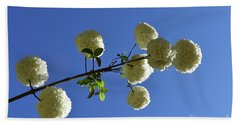Hand Towel featuring the photograph Snowballs On A Stick by Skip Willits