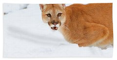 Hand Towel featuring the photograph Snowy Cougar by Steve McKinzie