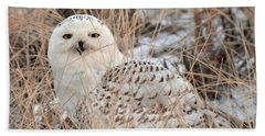 Snowy Owl Hand Towel by Nancy Landry