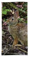 Hand Towel featuring the photograph Some Bunny Stopped By by Bill Pevlor
