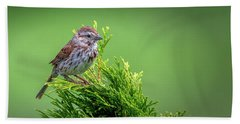 Song Sparrow Perched - Melospiza Melodia Hand Towel