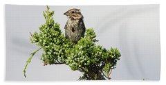 Song Sparrow Port Jefferson New York Hand Towel