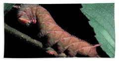 Sphinx Moth Caterpillar Hand Towel