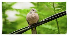 Spotted Dove   Hand Towel